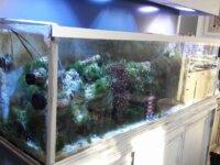 Aquarium eau de mer 600 l équipé en service 3