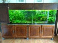 aquarium 1000l 1