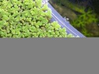Plantes flottantes et nourriture vivante ! 1