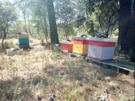 4 essaims à vendre + ruches si nécessaire