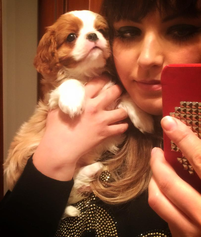Adopter Donne Chiot Cavalier King Char Chien