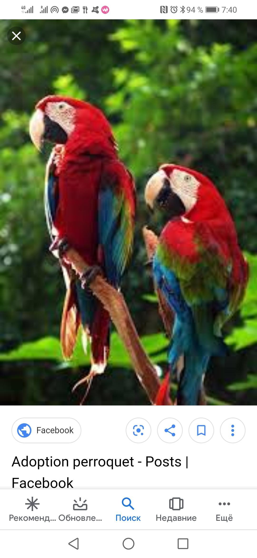 Adopter Je Cherche Un Perroquet Gratui Oiseau