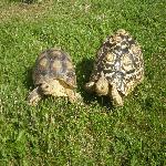 Alizé et Chanel