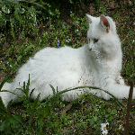 Nanouk dit Prince Igor du Creuzistan