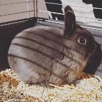 Bugs (Bunny)