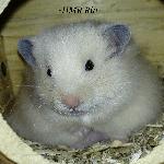 HMR Rin