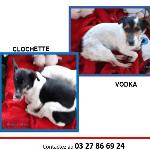 Clochette et Vodka