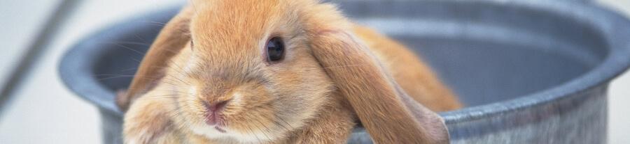 Les plus beaux bébés lapins