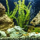 Comment bien effectuer son rodage d'aquarium ?