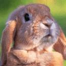 Mon lapin peut-il vivre dehors ?