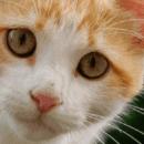 Quels sont les aliments dangereux pour le chat ?