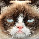 10 Chats stars du web