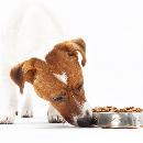 Les meilleures croquettes pour chien