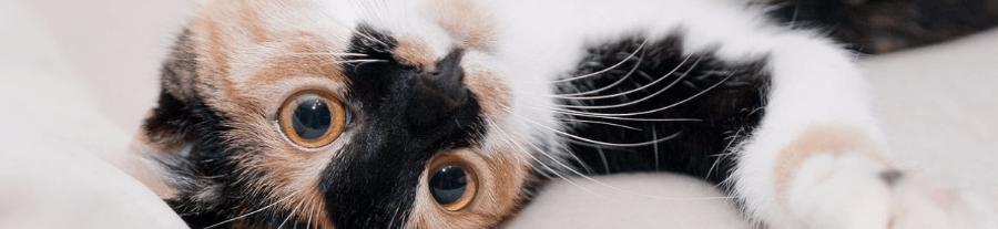 Faire garder son chat pendant les vacances - Garder des maisons pendant les vacances ...
