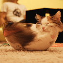 Les chats dorment dans des positions bizarres