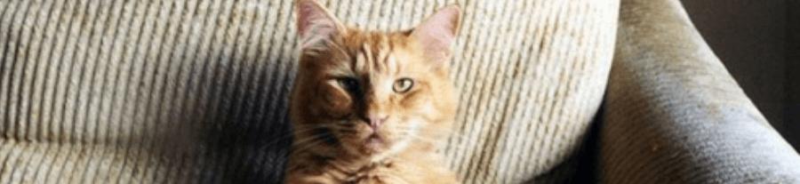 Quand les chats s'assoient comme des hommes