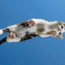 Photos de chats vus d'en dessous