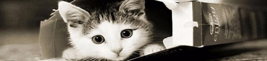 Les chats qui jouent à cache cache
