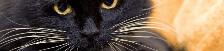 Les chats avec de belles moustaches