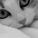 Les assurances pour chat