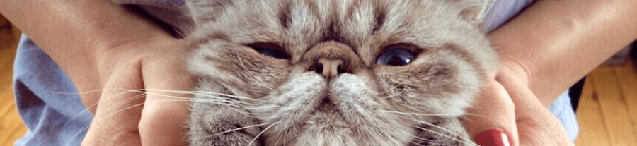 Les races de chat les plus originales