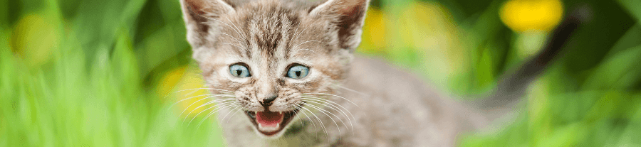 Mon chat ne ronronne pas