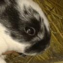 Cage du lapin: comment la choisir, installer, équiper et nettoyer ?