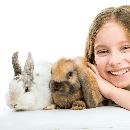 Apprendre à un lapin à être propre