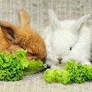 Bien élever et s'occuper de son lapin