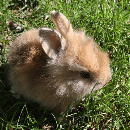 Comment nourrir un lapin ?