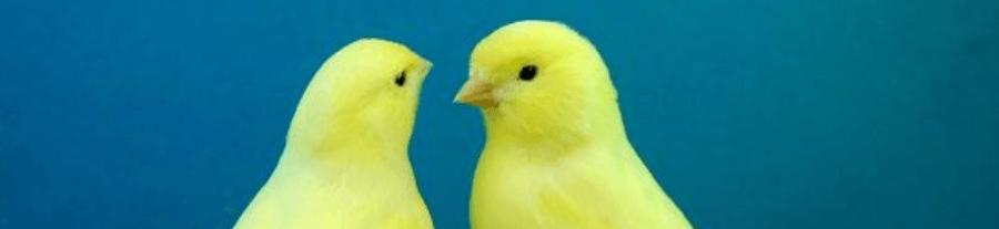 Oiseaux domestiques : comment choisir ?
