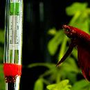 Température idéale dans l'aquarium
