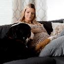 Grossesse nerveuse chez la chienne