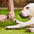 Couper les ongles d'un chien