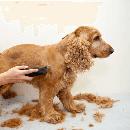 Les tondeuses pour chien
