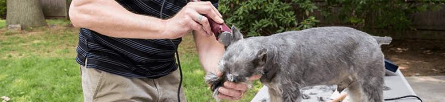 Comment tondre son chien ?