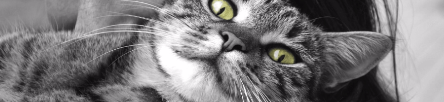 Combien coûte un chat ?
