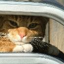 Comment voyager avec son chat ?