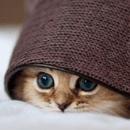 Le plus beau chaton du monde