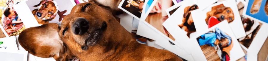 Idées cadeau Noël : Top 10 des objets connectés pour animaux