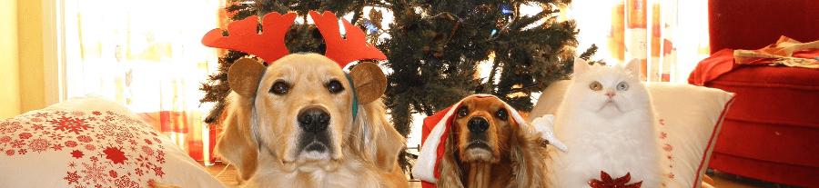Idées cadeau de Noël: meilleurs livres 2015 sur les animaux