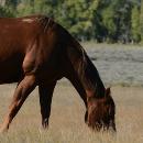 Comment bien nourir son cheval?