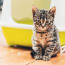Mon chat n'est pas propre: que faire ?