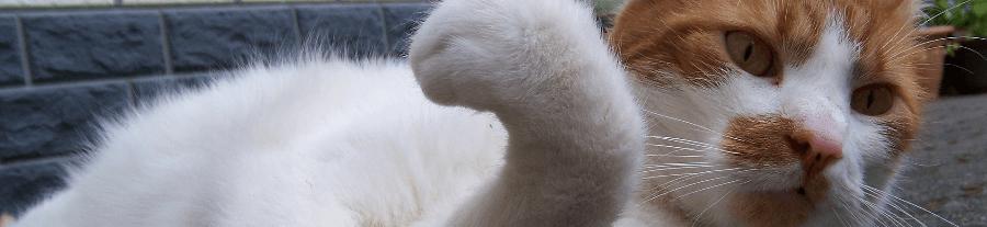 Mon chat est-il droitier ou gaucher ?