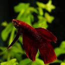 10 meilleurs poissons d'aquarium pour débuter