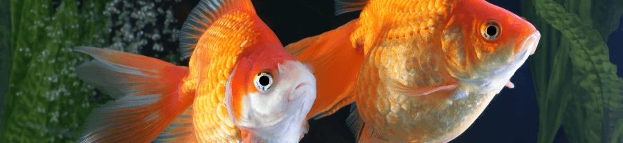 Tout savoir sur le C02 dans l'aquarium