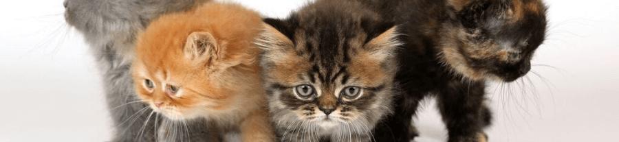 Empêcher un chat de mordre