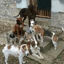 « Au bonheur des chiens » : Gérer une pension canine familiale