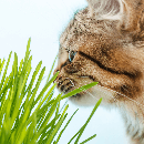 Comment savoir si mon chat a des vers et le soigner ?