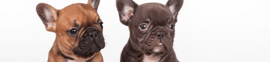 prix d 39 un chien. Black Bedroom Furniture Sets. Home Design Ideas